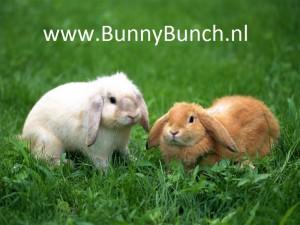 BunnyBunch