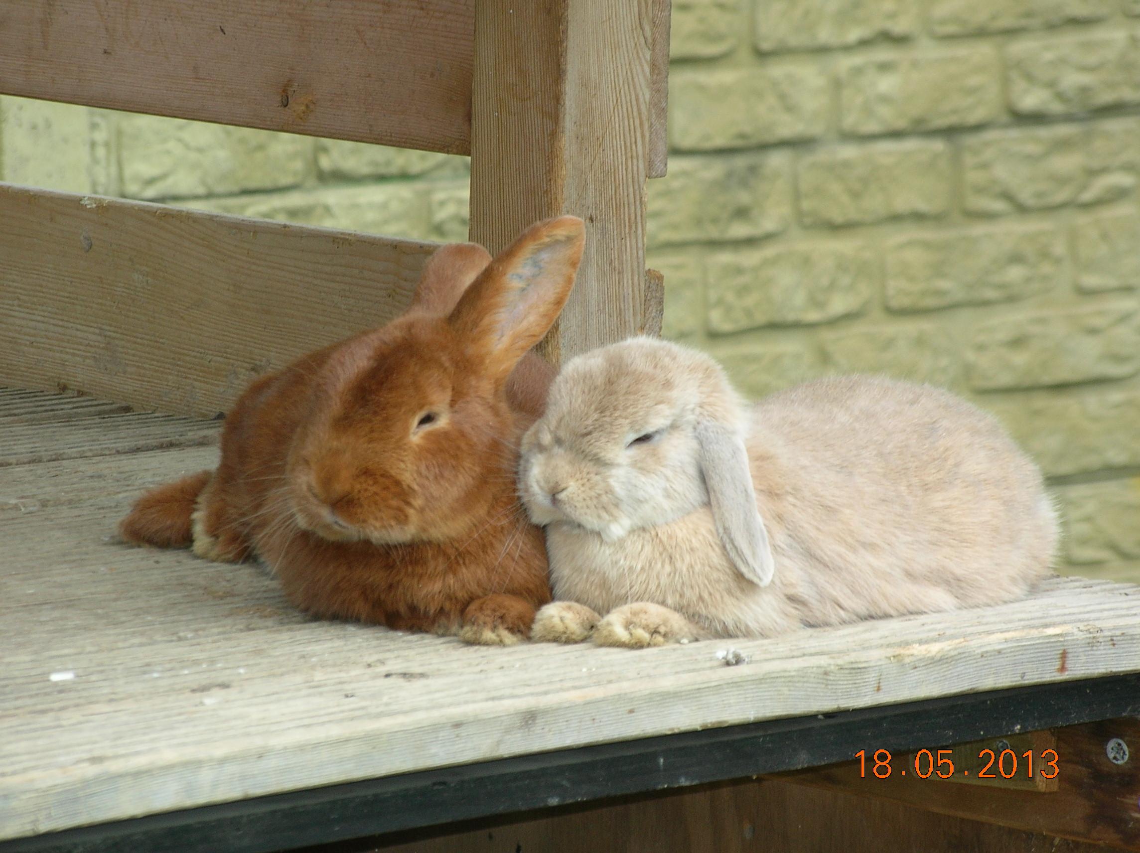André (een Thrianta) en Becky knusjes samen.