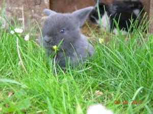 Blauw jong van Asta, 3 weken oud