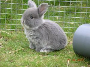 Bijoux, 3 weken oud