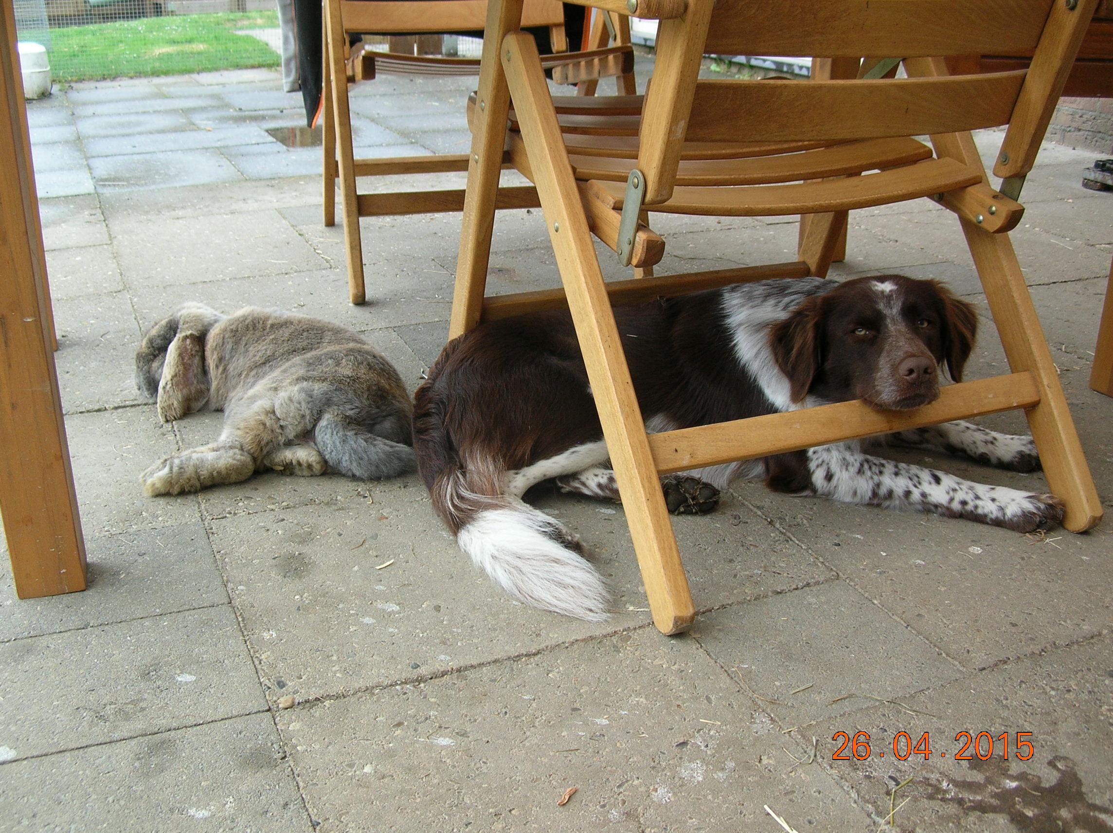 Na de jacht is het goed uitrusten voor Perro en Arno